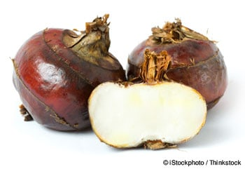 water chestnuts photo
