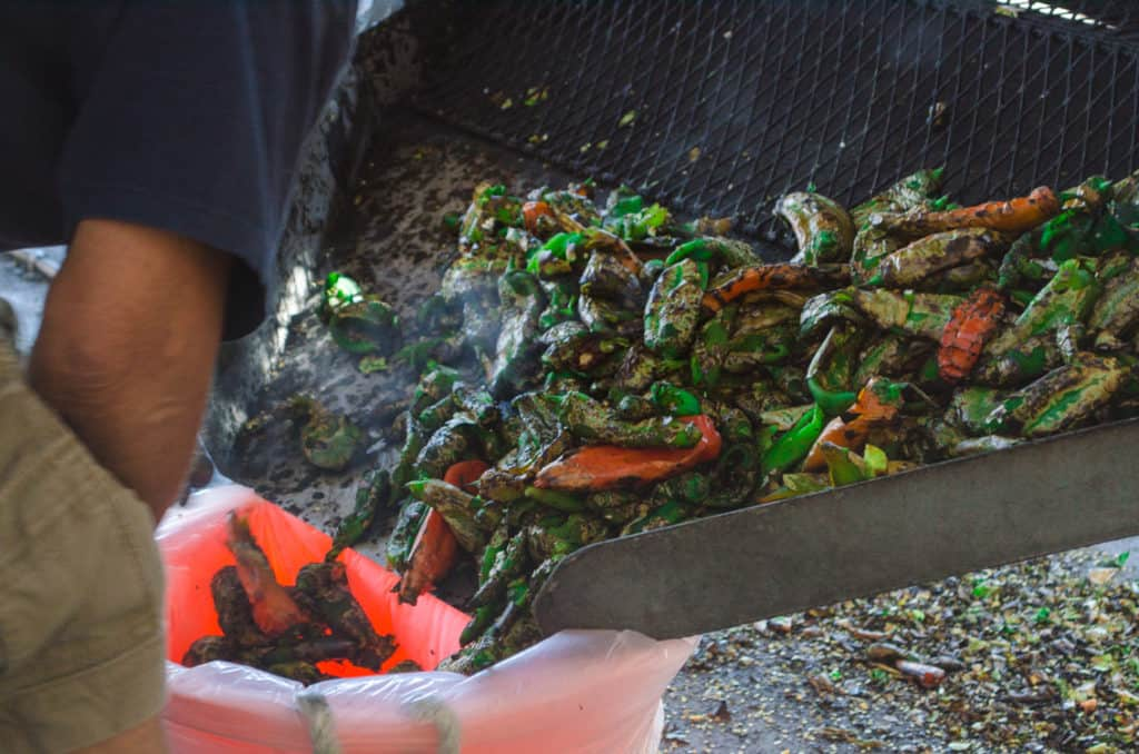 Roasted green chiles are emptied from the roaster into large plastic bags for New Mexico Green Chile Roasting 101
