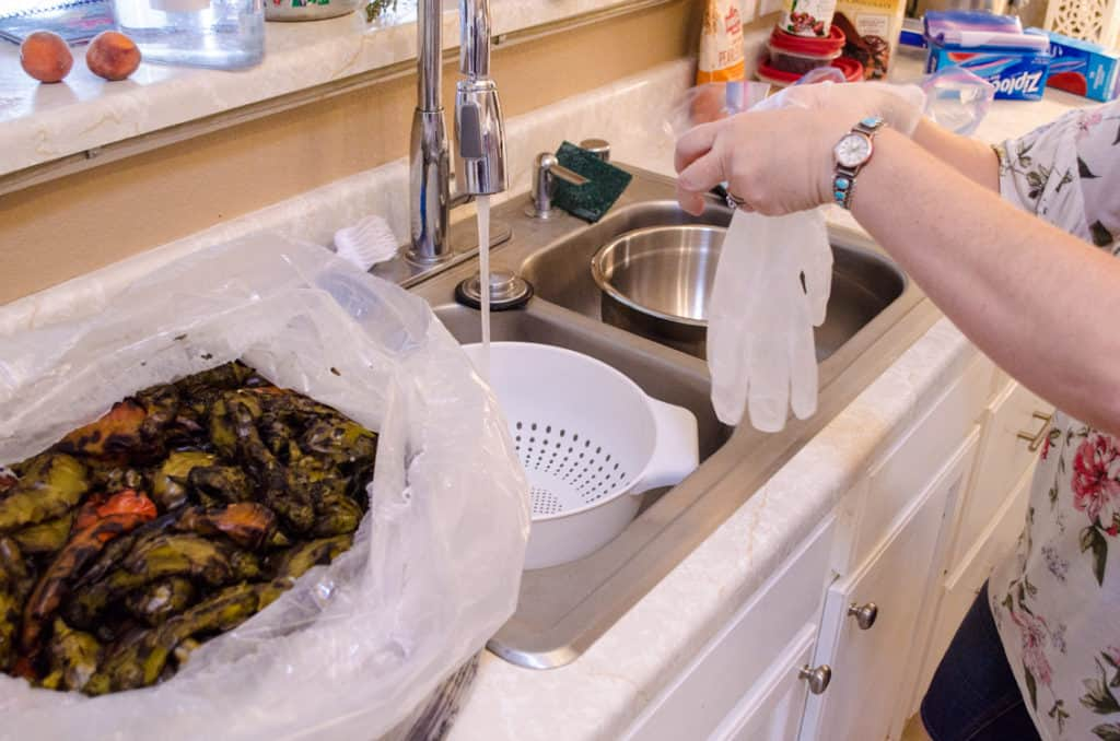 Prep over a kitchen sink with gloves for New Mexico Green Chile Roasting 101