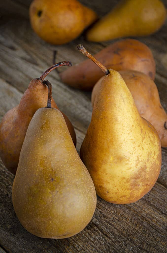 Golden, red and brown Bosc variety pears sit upright on a wooden table.